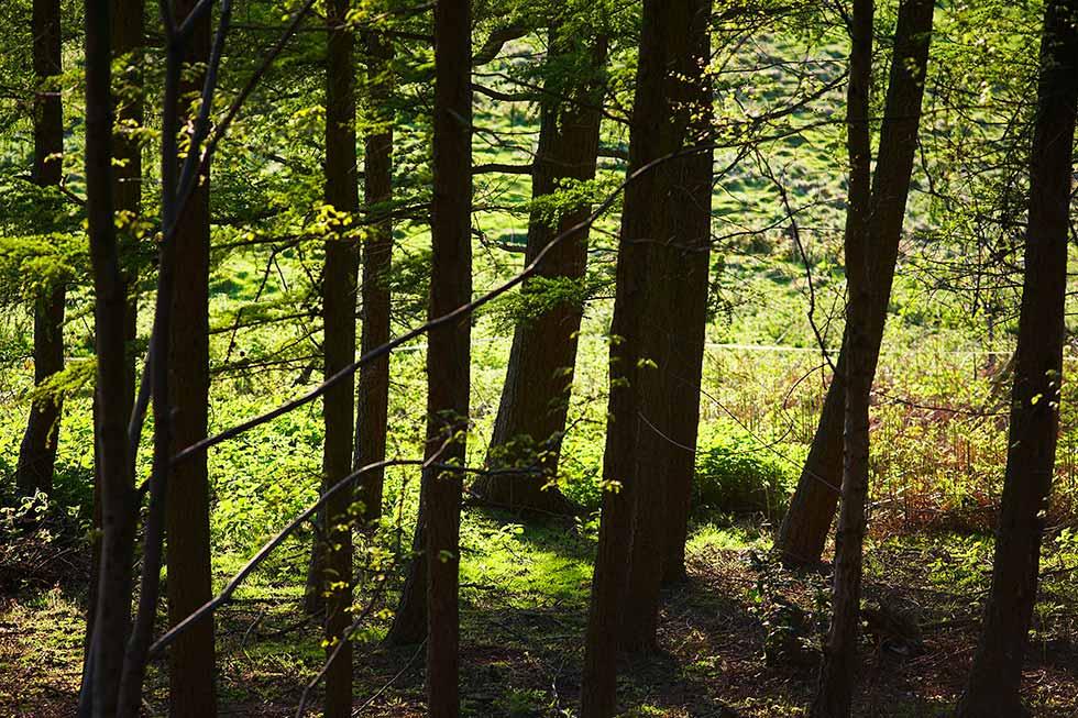 Nachhaltige Waldwirtschaft durch FSC und PEFC Siegel