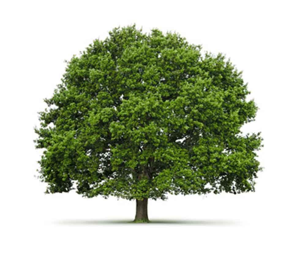 Grüner Baum als Symbol für eine nachhaltige Etikettenproduktion
