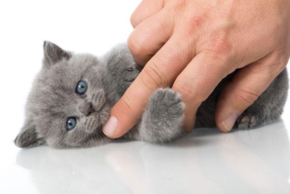Eine Hand streichelt eine Katze, die so weich ist, wie die Oberfläche des SOFTTOUCHLabels